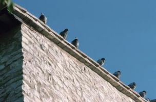 Come tenere gli uccelli di appollaiarsi sul tetto del portico
