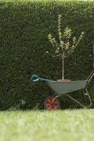 Come utilizzare un albero Dibble