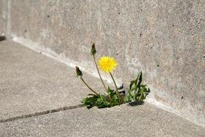 Come rimuovere le erbacce con candeggina