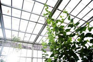 Come Container Garden in una serra