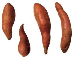 Si può crescere una patata dolce vite da una patata dolce?