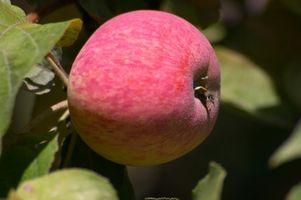 Terreno ideale per gli alberi di Apple