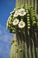 Fiori che prosperano in AZ