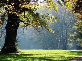 Si può crescere prati sotto alberi di quercia?
