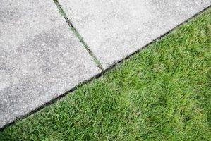 Come pulire Moss fuori di un vialetto di cemento