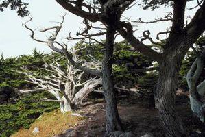Impianti per Sotto un Cipresso di Monterey