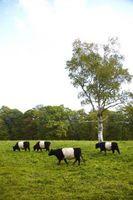 Come eseguire il seeding Ryegrass in autunno