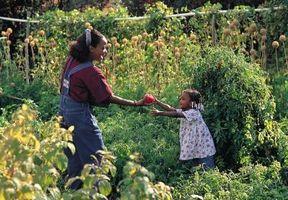 Che cosa si usa per Ties Quando si picchetta pomodori?