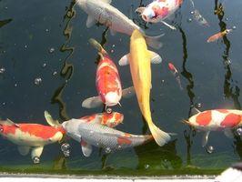 Come fare una pompa dello stagno di pesci