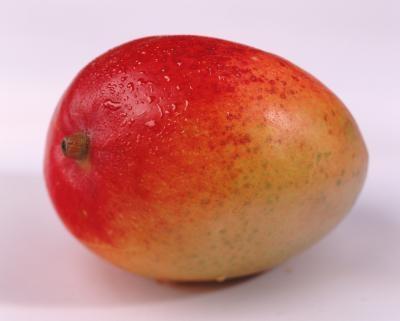 mango Bush