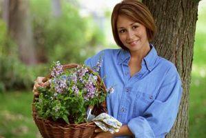 Ho bisogno di pacciame miei Lavendar piante prima dell'inverno?