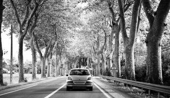 Elenco dei alberi Esterni per bloccare Suoni