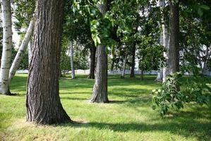 Come coltivare alberi in terreni poveri