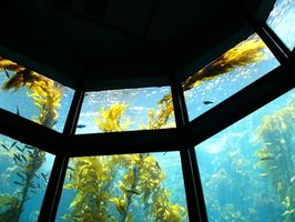 Diverse varietà di piante Ocean