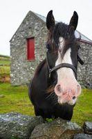 Effetti del cavallo urina sul Terreno del giardino