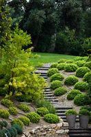 Le malattie più comuni di piante ornamentali