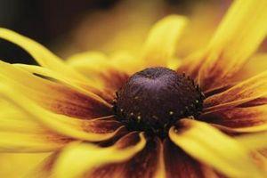 Come decorare con Brown & Yellow