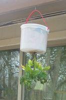 Come piantare pomodori testa in giù in un cesto appeso