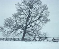 Quanta forza ci vuole per spostare un albero pendente?