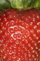 Come coltivare fragole in balle di fieno