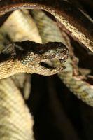Come sbarazzarsi di serpenti in un seminterrato