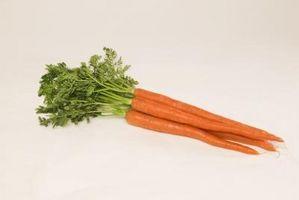 I migliori semi di carota