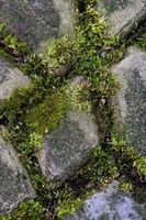 Come sbarazzarsi di Moss nelle fessure
