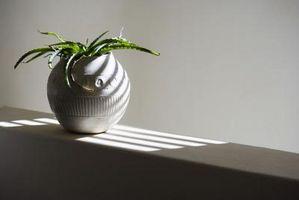 Come prendersi cura di piante grasse in casa durante l'inverno