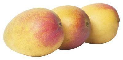 Processo di piantare un albero Mango