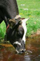 Come Deviare Spring Water