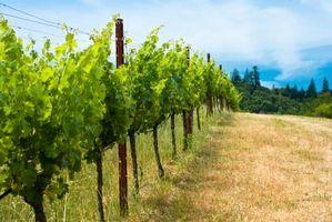 Le quattro cose più importanti circa il terreno adatto per la coltivazione della vite