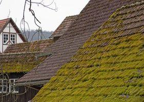 Come uccidere Moss crescita su assicelle del tetto