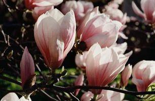 Alberi in fiore con spessore Light Pink Blossoms