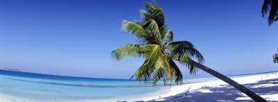Come piantare un messicano Palma nana