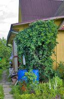 Alberi da frutto per un piccolo spazio