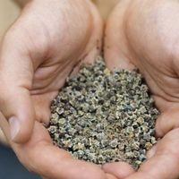 Il periodo di conservazione dei semi dell'erba