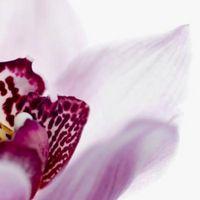 Varietà rosa orchidea