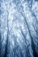 Che Pasti eucalipto foglie?