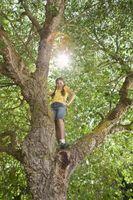 Un lato del albero non ha foglie