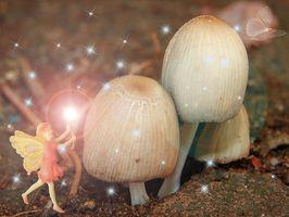 Perché i funghi crescono in un cerchio?