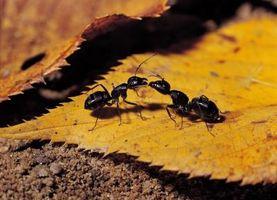 Come sbarazzarsi di insetti a Raleigh, North Carolina