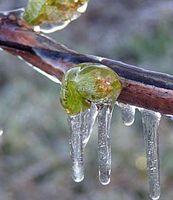 Come proteggere le piante dal gelo Danni