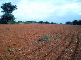 Come verificare la qualità del suolo