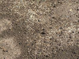 Il momento migliore per piantare erba semi in Illinois