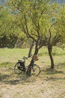 Come di raddrizzare un albero pendente