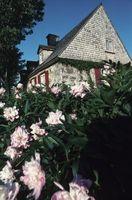 Le piante Cottage Garden tradizionale perenni