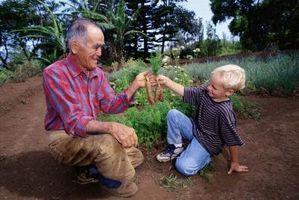 Ciò che provoca il semi di carota a crescere?