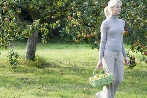 Quanti anni ha il un albero di mele quando inizia dando i suoi frutti?