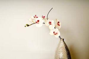 Che cosa c'è da sapere su Orchid Cura e manutenzione