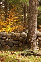 Come utilizzare il fiume di pietra in paesaggistica